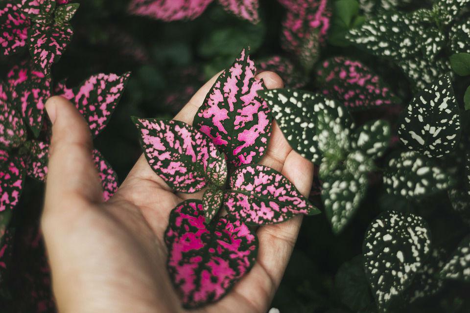 Parfum rechargeable : un geste pour l'environnement