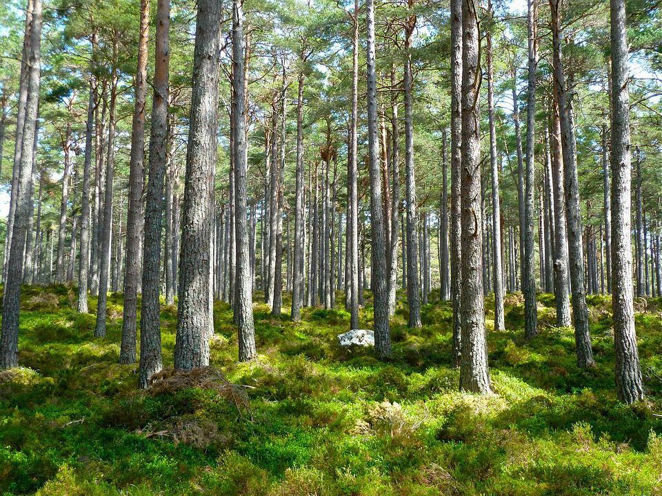Qu'est-ce que la transition écologique?