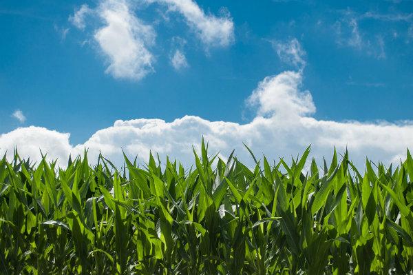Zoom sur les produits à Haute Valeur Environnementale : les légumes qui protègent notre environnement